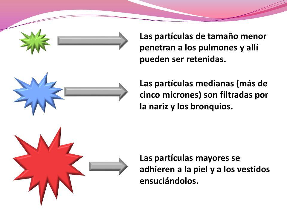 Las partículas medianas (más de cinco micrones) son filtradas por la nariz y los bronquios. Las partículas de tamaño menor penetran a los pulmones y a