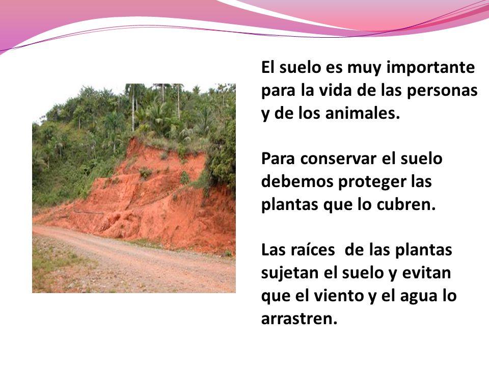 El suelo es muy importante para la vida de las personas y de los animales. Para conservar el suelo debemos proteger las plantas que lo cubren. Las raí