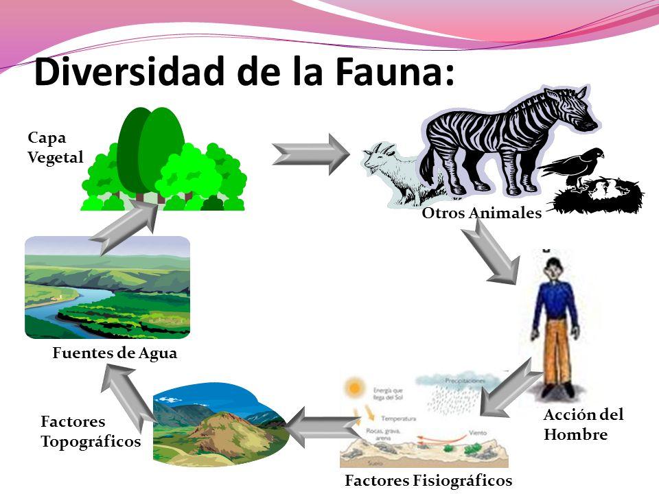 Diversidad de la Fauna: Capa Vegetal Otros Animales Fuentes de Agua Factores Topográficos Factores Fisiográficos Acción del Hombre