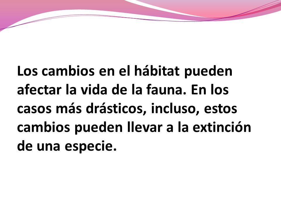 Los cambios en el hábitat pueden afectar la vida de la fauna. En los casos más drásticos, incluso, estos cambios pueden llevar a la extinción de una e