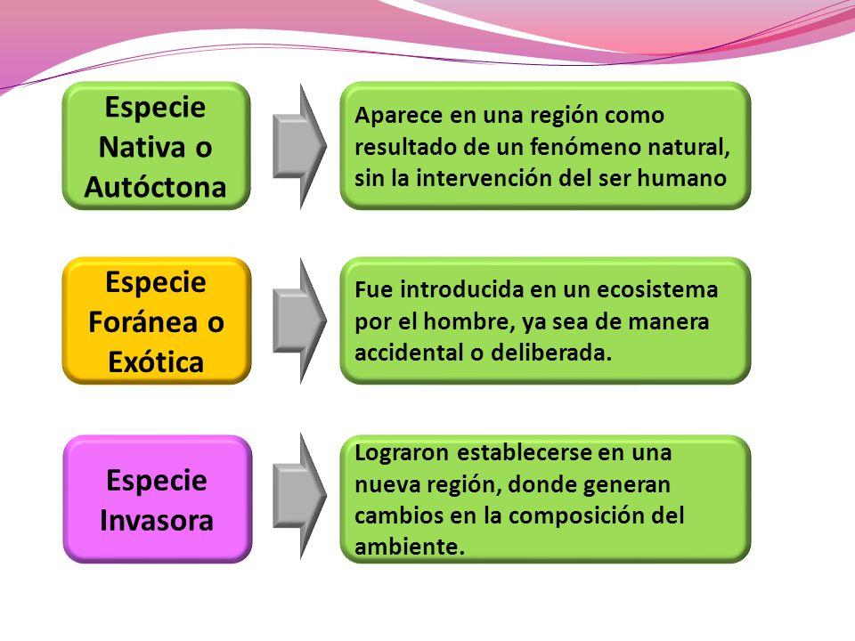 Especie Nativa o Autóctona Especie Foránea o Exótica Especie Invasora Aparece en una región como resultado de un fenómeno natural, sin la intervención