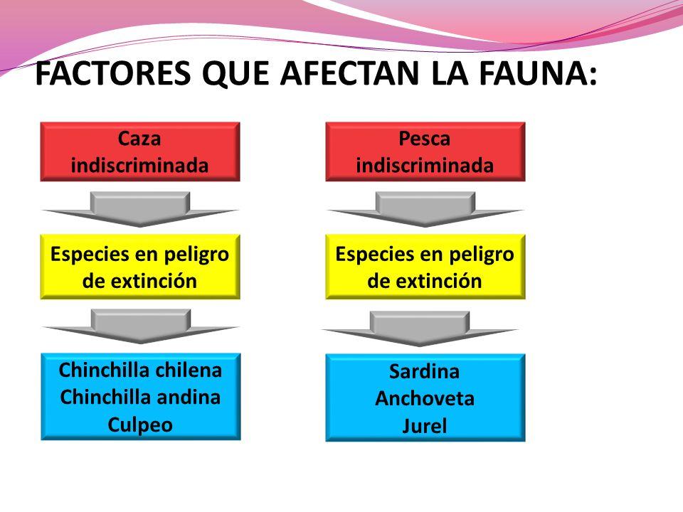 FACTORES QUE AFECTAN LA FAUNA: Caza indiscriminada Especies en peligro de extinción Chinchilla chilena Chinchilla andina Culpeo Pesca indiscriminada E