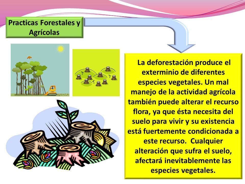 Practicas Forestales y Agrícolas La deforestación produce el exterminio de diferentes especies vegetales. Un mal manejo de la actividad agrícola tambi