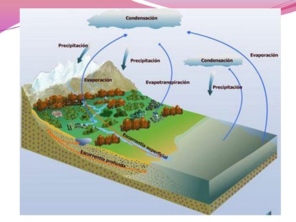 Lluvia acida Consecuencia de las actividades industriales y del transporte, contamina la atmósfera y es responsable de la destrucción de grandes bosques.