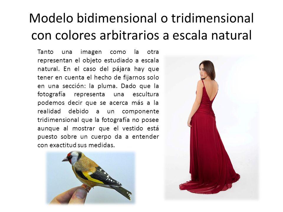 Modelo bidimensional o tridimensional con colores arbitrarios a escala natural Tanto una imagen como la otra representan el objeto estudiado a escala