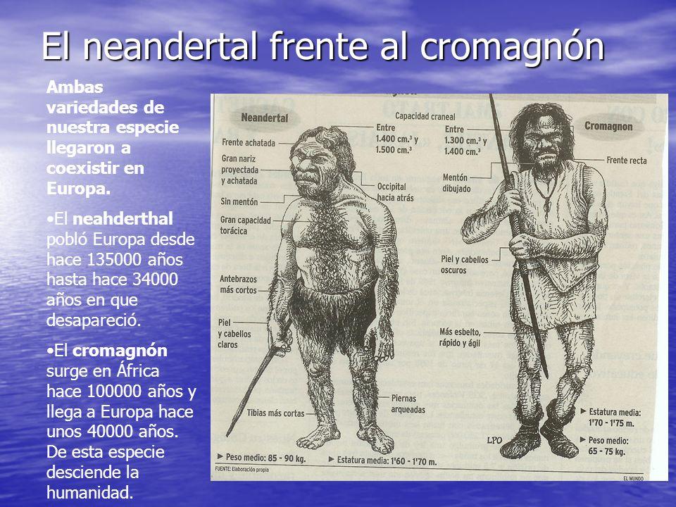 El neandertal frente al cromagnón Ambas variedades de nuestra especie llegaron a coexistir en Europa. El neahderthal pobló Europa desde hace 135000 añ
