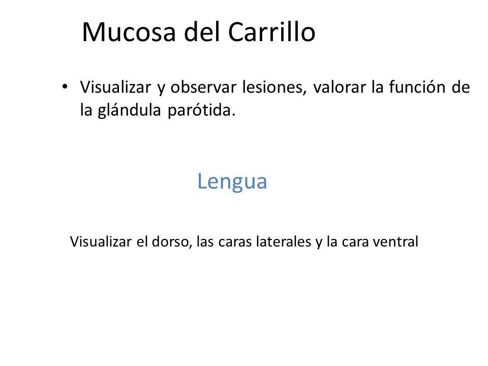 Mucosa del Carrillo Visualizar y observar lesiones, valorar la función de la glándula parótida. Visualizar el dorso, las caras laterales y la cara ven