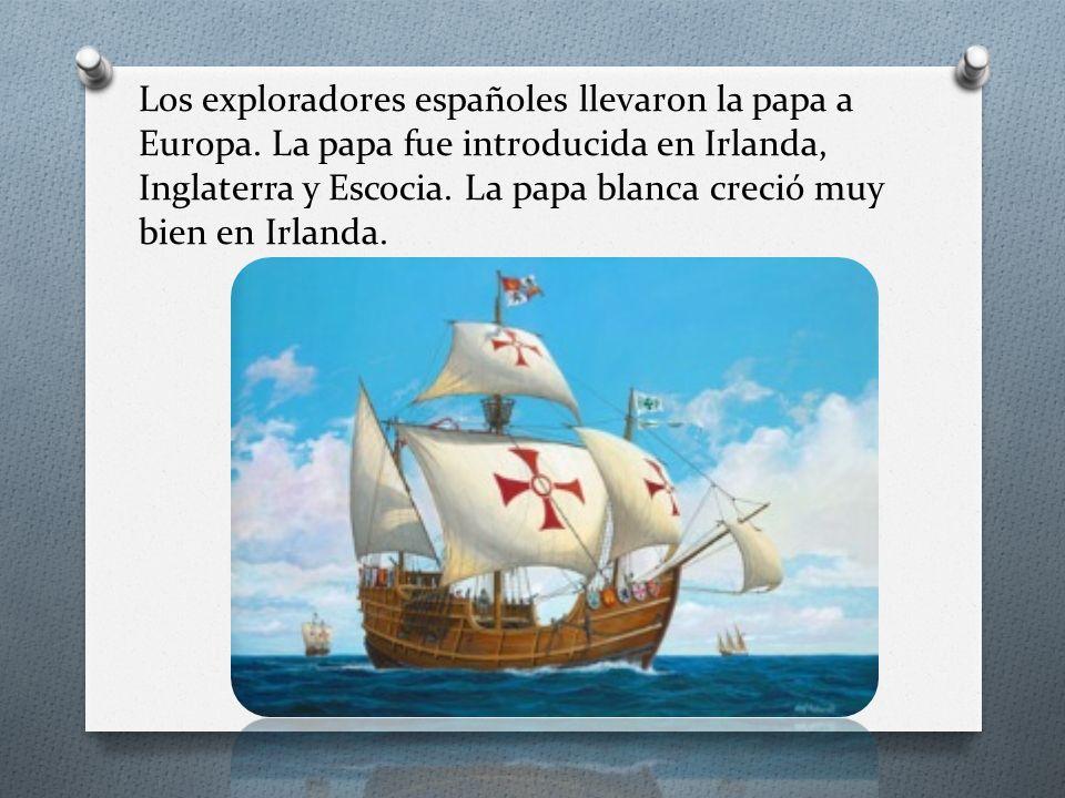 Los exploradores españoles llevaron la papa a Europa. La papa fue introducida en Irlanda, Inglaterra y Escocia. La papa blanca creció muy bien en Irla