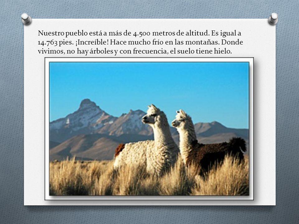 Nuestro pueblo está a más de 4.500 metros de altitud. Es igual a 14.763 pies. ¡Increíble! Hace mucho frío en las montañas. Donde vivimos, no hay árbol