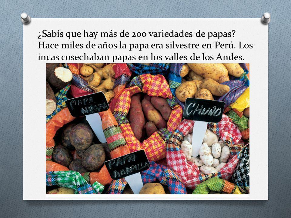 ¿Sabís que hay más de 200 variedades de papas? Hace miles de años la papa era silvestre en Perú. Los incas cosechaban papas en los valles de los Andes