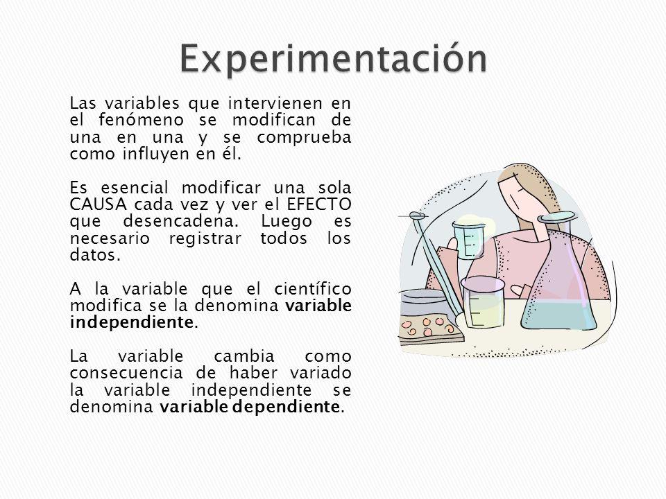 Los datos obtenidos en la experimentación se deben recoger en tablas y pasar a gráficas para poder estudiar mejor sus relaciones.