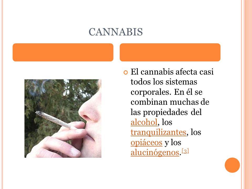 CANNABIS El cannabis afecta casi todos los sistemas corporales. En él se combinan muchas de las propiedades del alcohol, los tranquilizantes, los opiá
