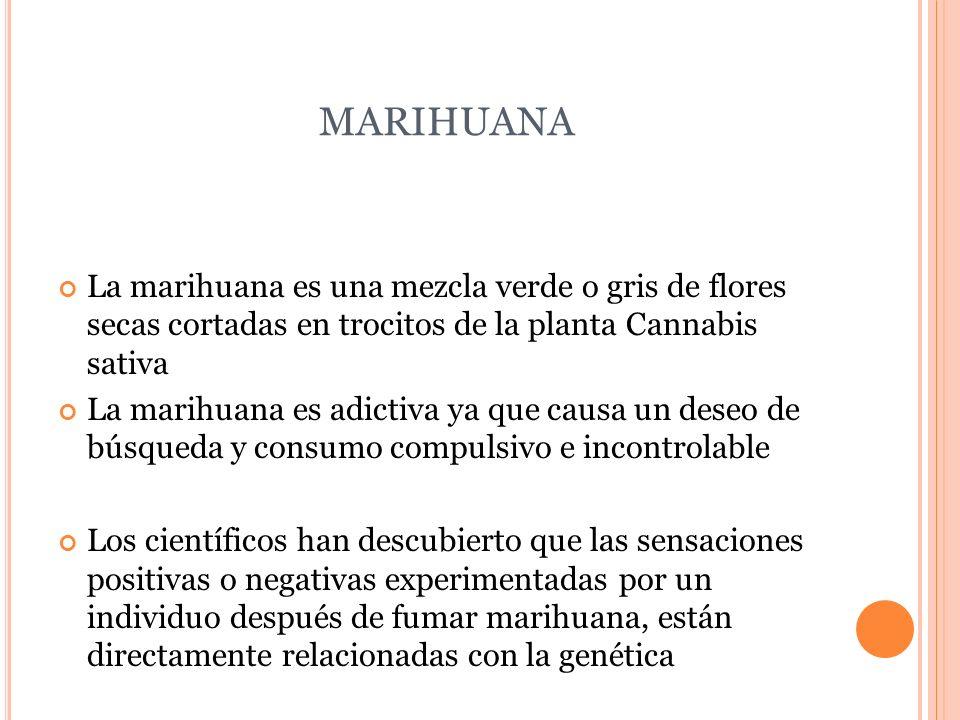 MARIHUANA La marihuana es una mezcla verde o gris de flores secas cortadas en trocitos de la planta Cannabis sativa La marihuana es adictiva ya que ca