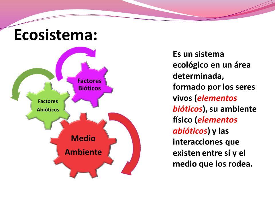 Cadena trófica es el proceso de transferencia de energía alimenticia a través de una serie de organismos, en el que cada uno se alimenta del precedente y es alimento del siguiente.