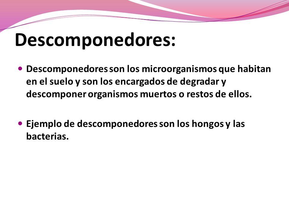 Descomponedores: Descomponedores son los microorganismos que habitan en el suelo y son los encargados de degradar y descomponer organismos muertos o restos de ellos.