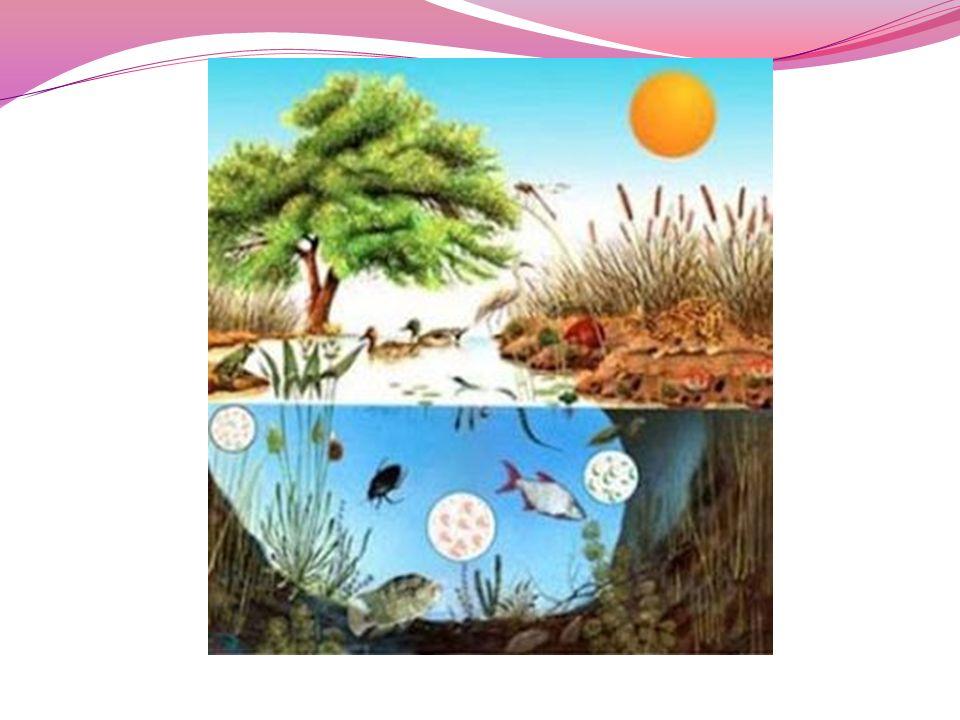 Hábitat: Especie (Vegetal o Animal) Lugar donde vive HABITAT Lugar al cual la especie esta adaptada