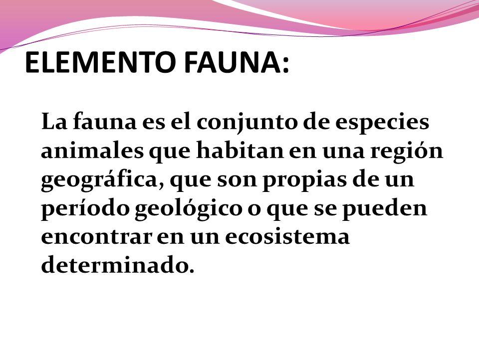 ELEMENTO FAUNA: La fauna es el conjunto de especies animales que habitan en una región geográfica, que son propias de un período geológico o que se pueden encontrar en un ecosistema determinado.