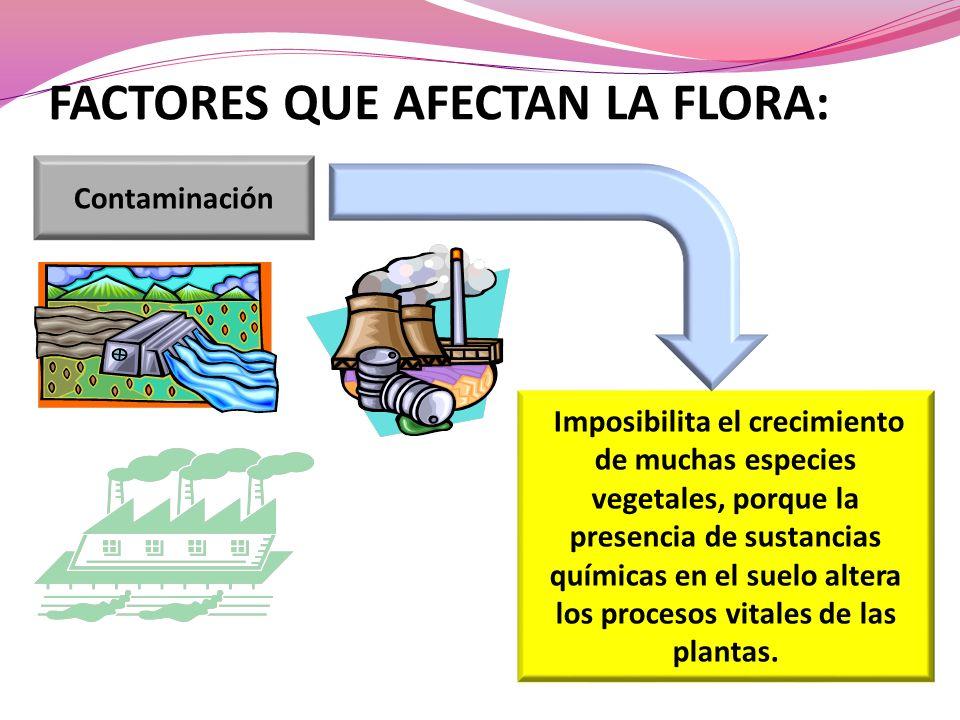 FACTORES QUE AFECTAN LA FLORA: Contaminación Imposibilita el crecimiento de muchas especies vegetales, porque la presencia de sustancias químicas en el suelo altera los procesos vitales de las plantas.