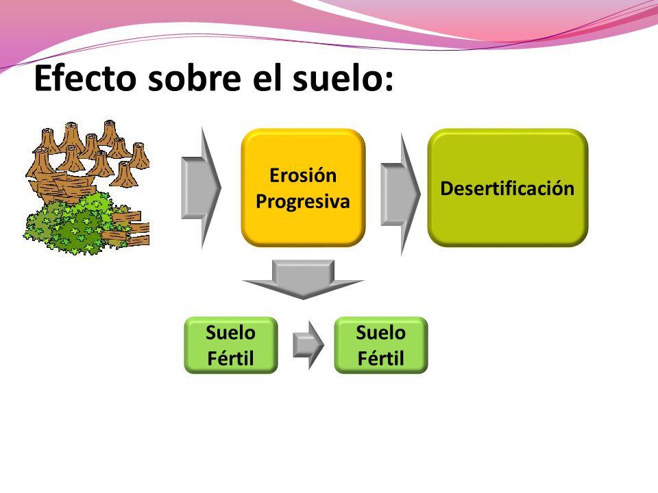 Efecto sobre el suelo: Erosión Progresiva Suelo Fértil Suelo Fértil Desertificación
