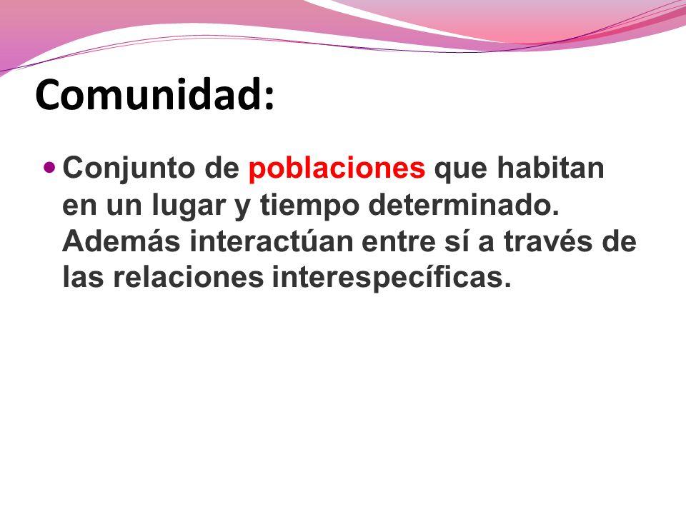 Biodiversidad: Coigües Coigüe común Coigüe de Chiloé Coigüe de Magallanes Arboles Coigües Robles Raulíes Lingues BOSQUE Flora Arbórea Sotobosque Suelo Territorio
