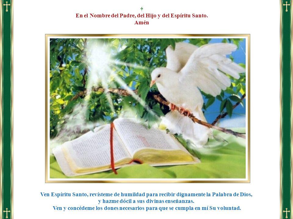 Ven Espíritu Santo, revísteme de humildad para recibir dignamente la Palabra de Dios, y hazme dócil a sus divinas enseñanzas. Ven y concédeme los done