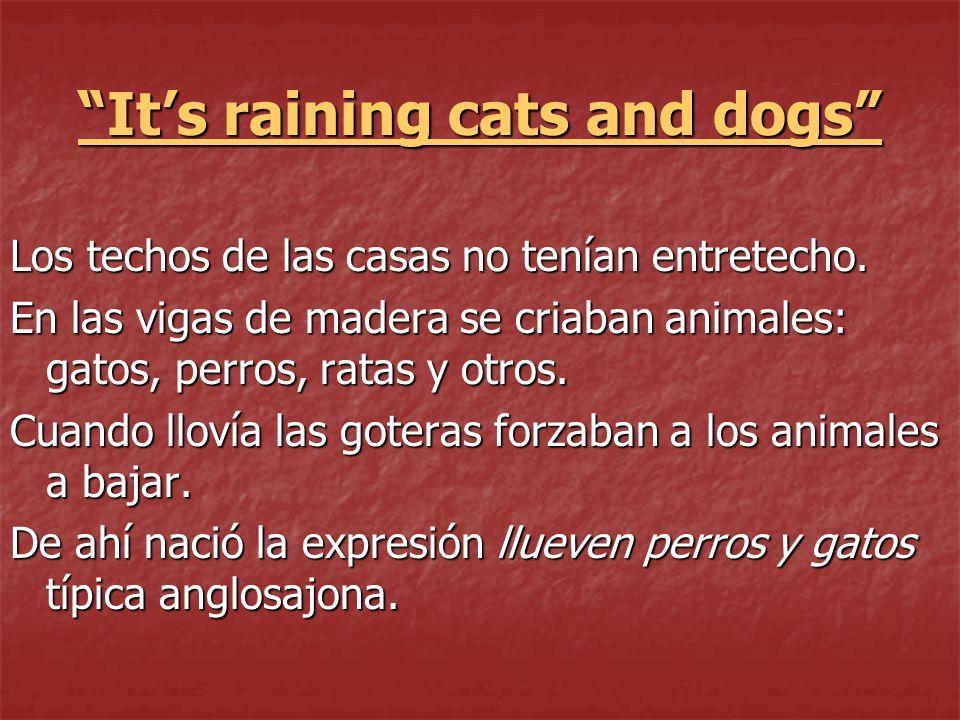 Its raining cats and dogs Los techos de las casas no tenían entretecho. En las vigas de madera se criaban animales: gatos, perros, ratas y otros. Cuan