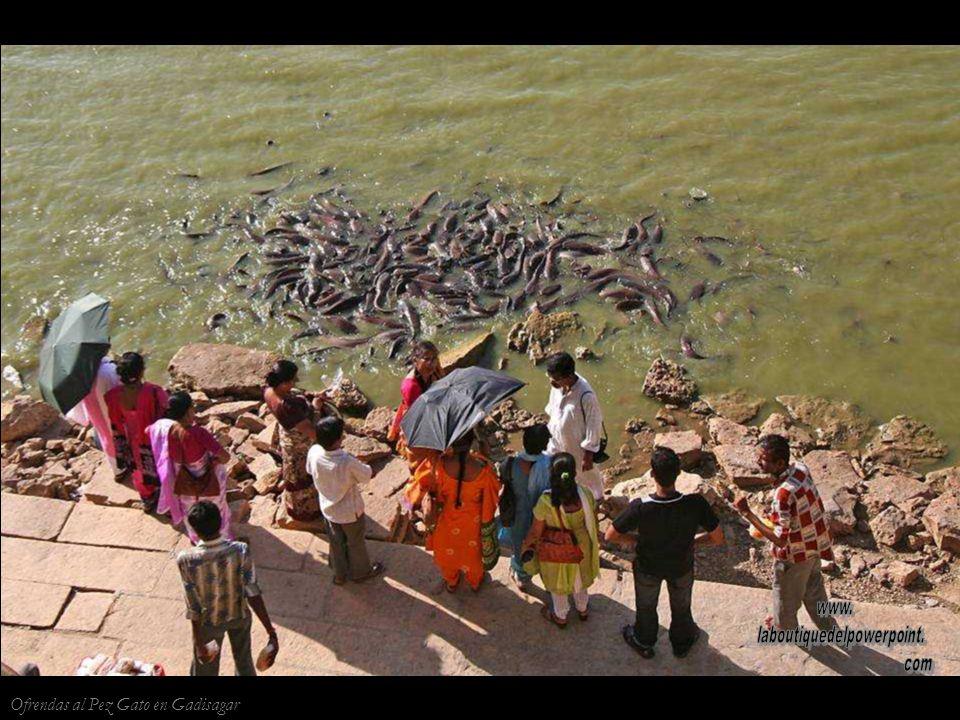 Jaisalmer Músico en el lago Gadisagar