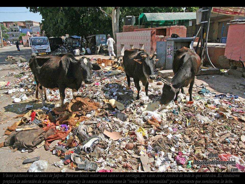 Jaipur. Sadu Los sadus devotos de Shiva se caracte- rizan por llevar una túnica (longhi) de color azafrán, por tres líneas horizon- tales que pintan e