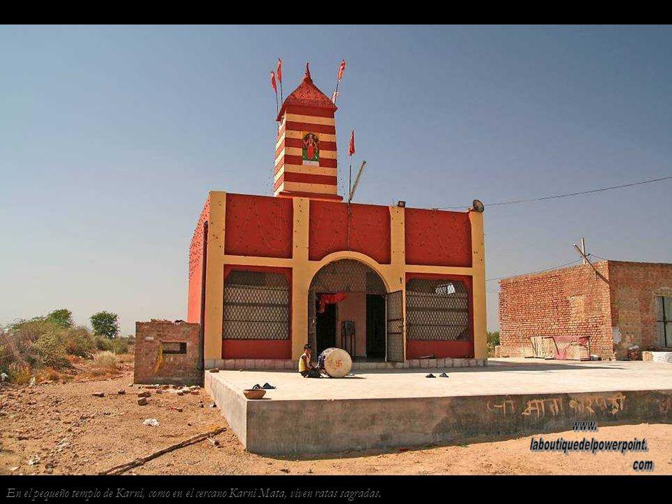 Peregrinos cerca de Bikaner. Los peregrinos recorren cientos de kilómetros, de templo en templo.