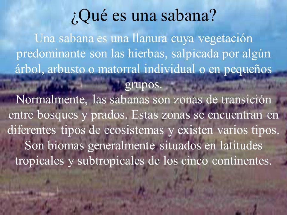 ¿Qué es una sabana? Una sabana es una llanura cuya vegetación predominante son las hierbas, salpicada por algún árbol, arbusto o matorral individual o