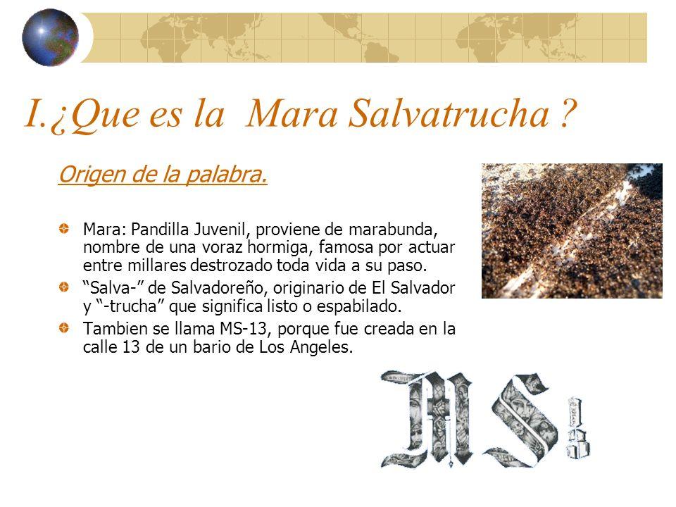 I.¿Que es la Mara Salvatrucha ? Origen de la palabra. Mara: Pandilla Juvenil, proviene de marabunda, nombre de una voraz hormiga, famosa por actuar en