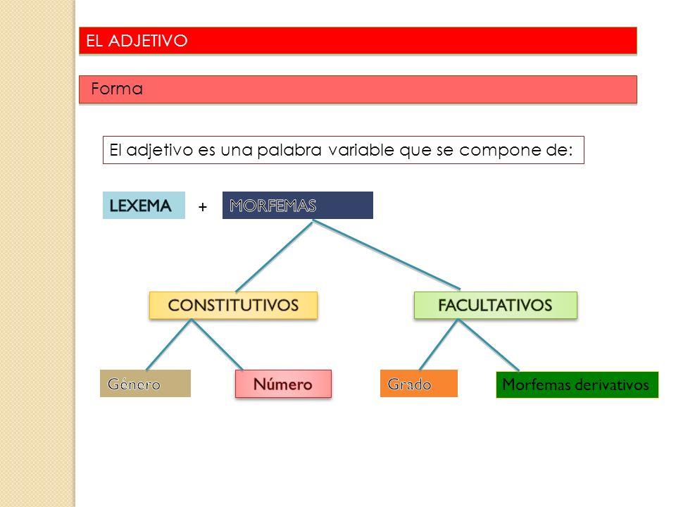 EL ADJETIVO Forma 24 El adjetivo es una palabra variable que se compone de: + Morfemas derivativos