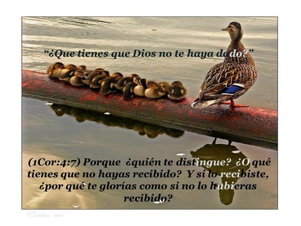Pablo exhorta a los corintios a sembrar (2Cor: 8:10-14) Y en esto doy mi consejo; porque esto os conviene a vosotros, que comenzasteis antes, no sólo a hacerlo, sino también a quererlo, desde el año pasado.