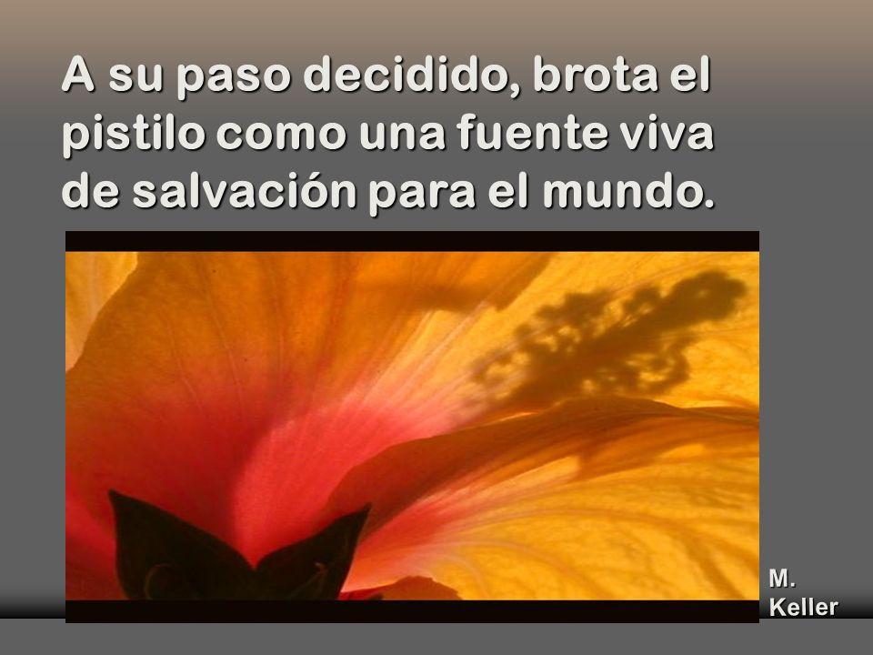 y que no se sabe si florecen de la sangre chorreante del pecho ampliamente escotado, o si es el proyecto del Padre que el Joven-Jesús, el Jesús-Novicio, se apresta a recorrer.