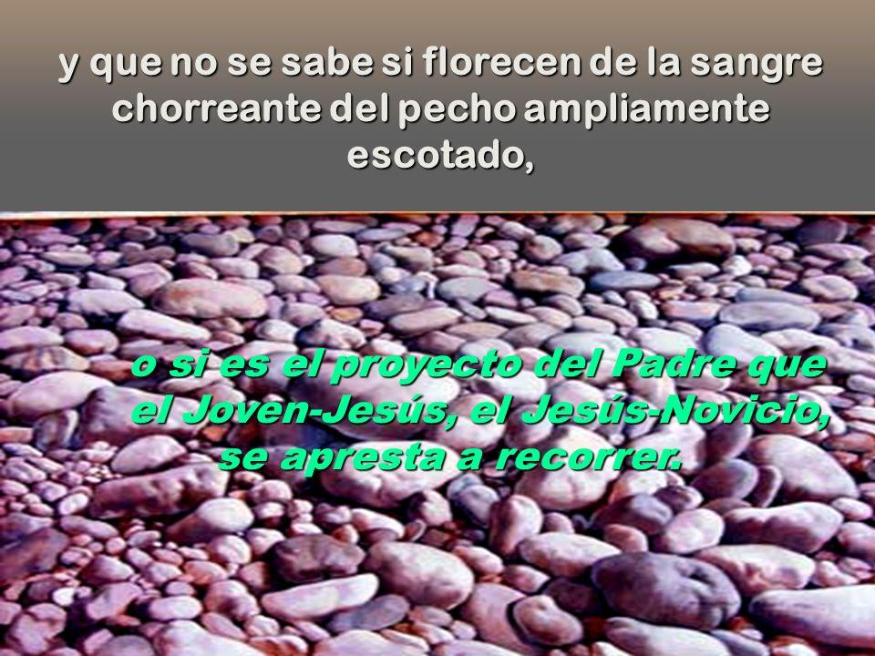 Sustenta sus pies descalzos sobre una de esas cayenas que el pueblo llama Sangre de Cristo L. Saavedra