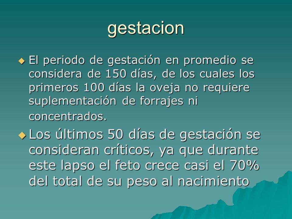 gestacion El periodo de gestación en promedio se considera de 150 días, de los cuales los primeros 100 días la oveja no requiere suplementación de for