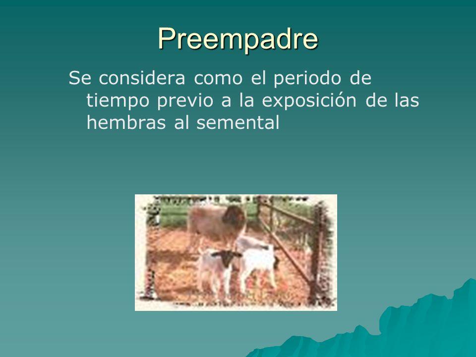Preempadre Se considera como el periodo de tiempo previo a la exposición de las hembras al semental