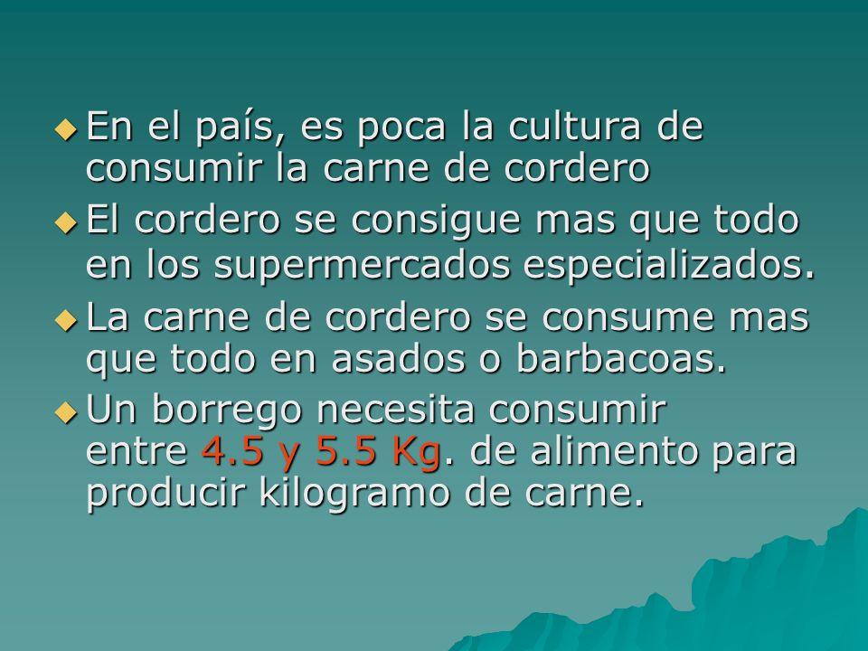En el país, es poca la cultura de consumir la carne de cordero En el país, es poca la cultura de consumir la carne de cordero El cordero se consigue m