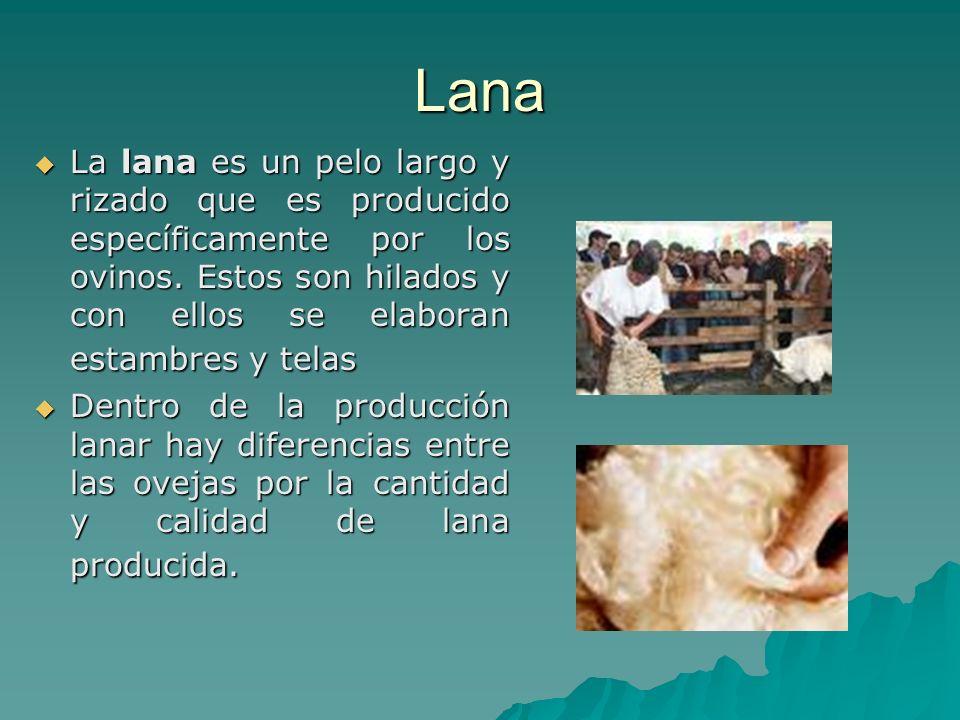 Lana La lana es un pelo largo y rizado que es producido específicamente por los ovinos. Estos son hilados y con ellos se elaboran estambres y telas La