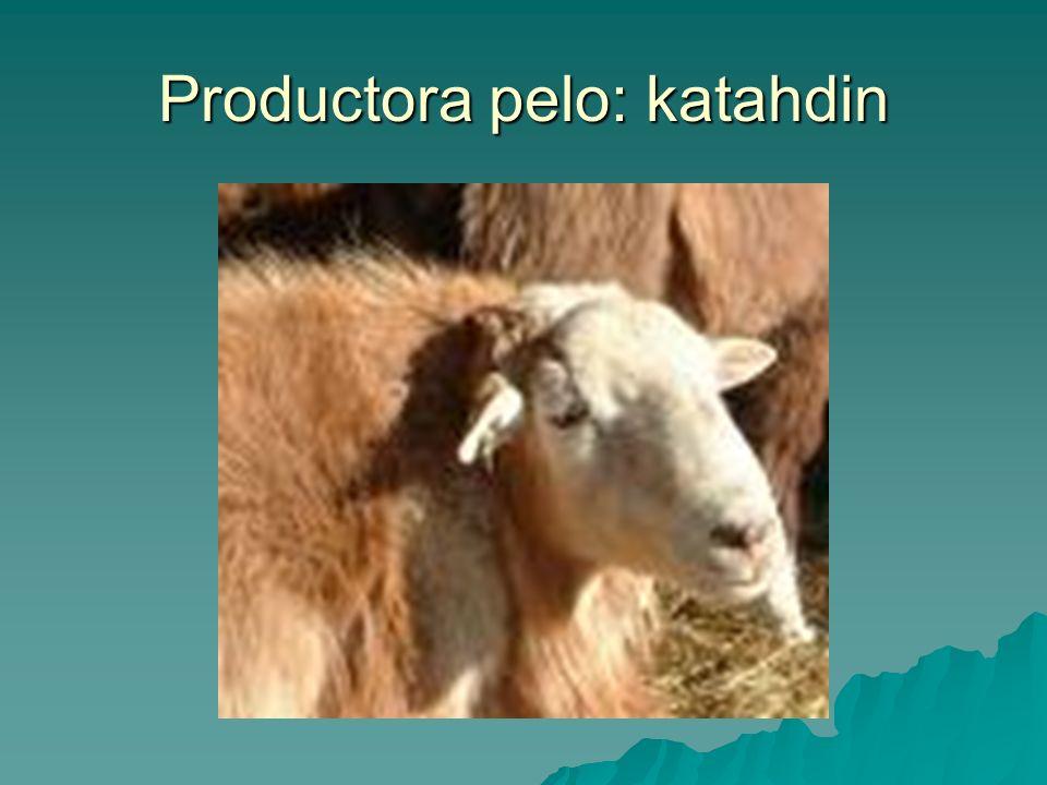 Productora pelo: katahdin