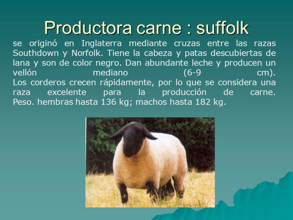 se originó en Inglaterra mediante cruzas entre las razas Southdown y Norfolk. Tiene la cabeza y patas descubiertas de lana y son de color negro. Dan a