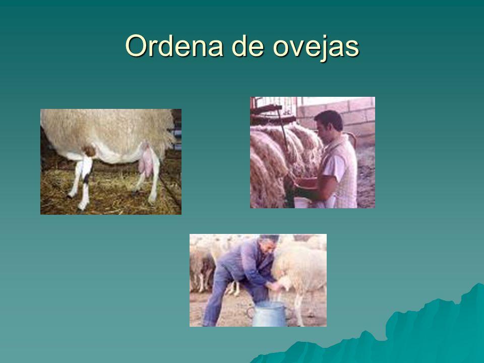 Ordena de ovejas
