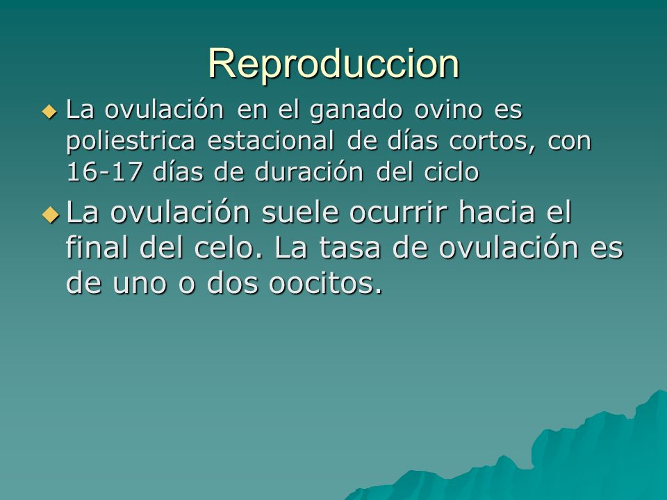 Reproduccion La ovulación en el ganado ovino es poliestrica estacional de días cortos, con 16-17 días de duración del ciclo La ovulación en el ganado
