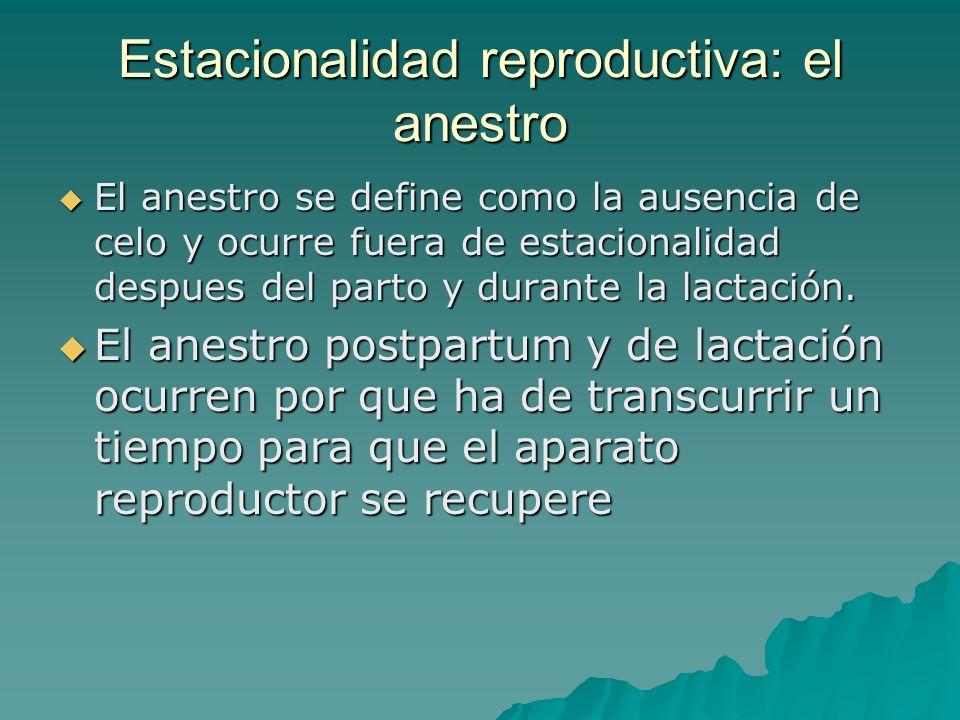 Estacionalidad reproductiva: el anestro El anestro se define como la ausencia de celo y ocurre fuera de estacionalidad despues del parto y durante la