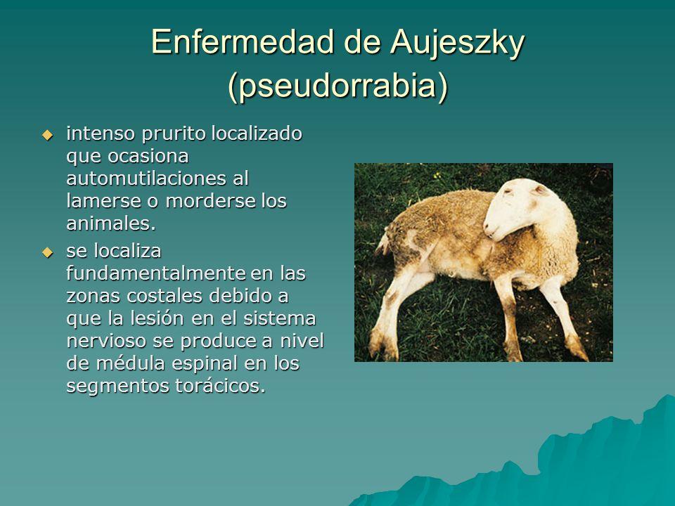 Enfermedad de Aujeszky (pseudorrabia) intenso prurito localizado que ocasiona automutilaciones al lamerse o morderse los animales. intenso prurito loc