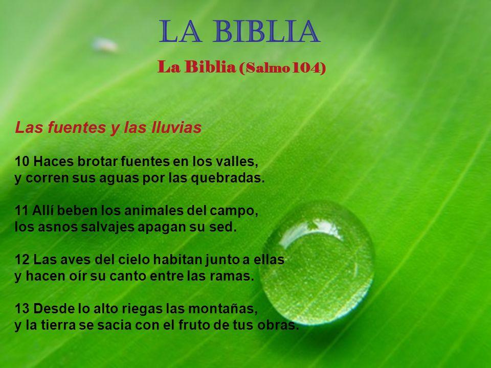 La BIBLIA La Biblia (Salmo 104) Las fuentes y las lluvias 10 Haces brotar fuentes en los valles, y corren sus aguas por las quebradas.