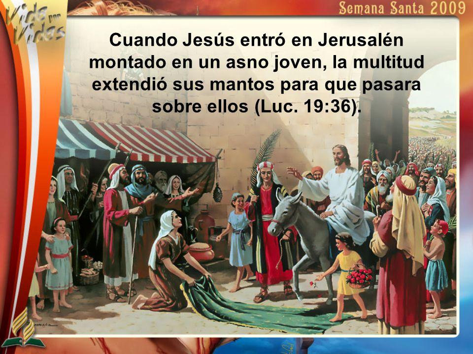 Cuando Jesús entró en Jerusalén montado en un asno joven, la multitud extendió sus mantos para que pasara sobre ellos (Luc. 19:36).