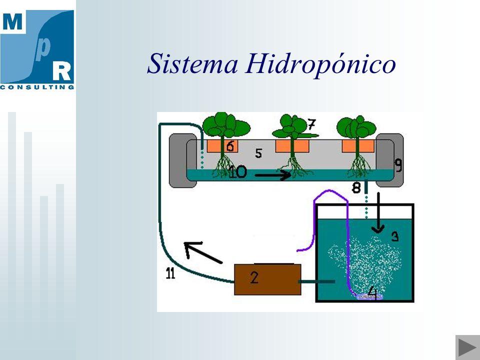 Sistema Hidropónico
