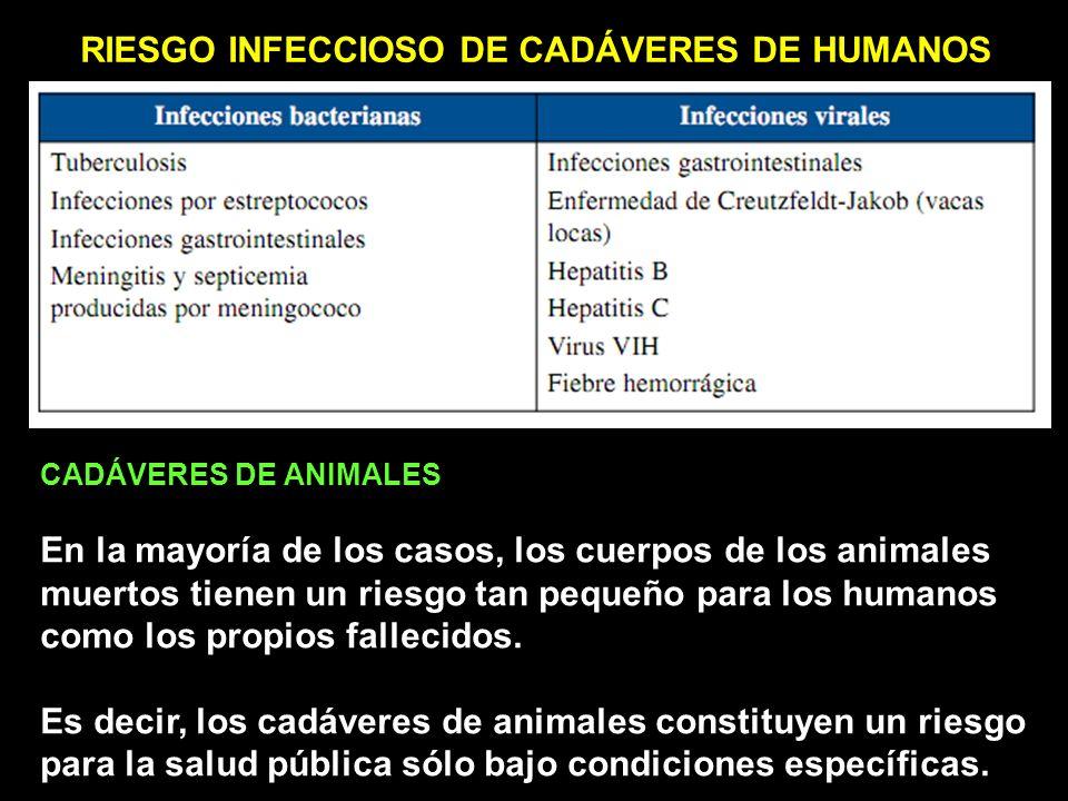 RIESGO INFECCIOSO DE CADÁVERES DE HUMANOS CADÁVERES DE ANIMALES En la mayoría de los casos, los cuerpos de los animales muertos tienen un riesgo tan pequeño para los humanos como los propios fallecidos.