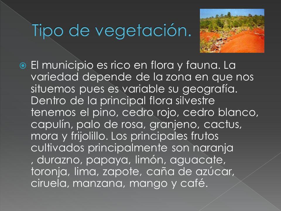 El municipio es rico en flora y fauna. La variedad depende de la zona en que nos situemos pues es variable su geografía. Dentro de la principal flora